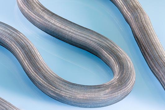 nitinol braid custom biomedical textile sample product cortland biomedical